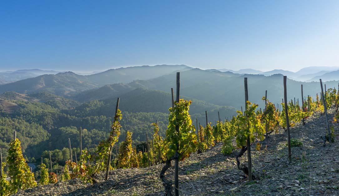 Priorat vineyard