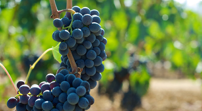 680x376_Greece_Lesser_known_Grapes.jpg