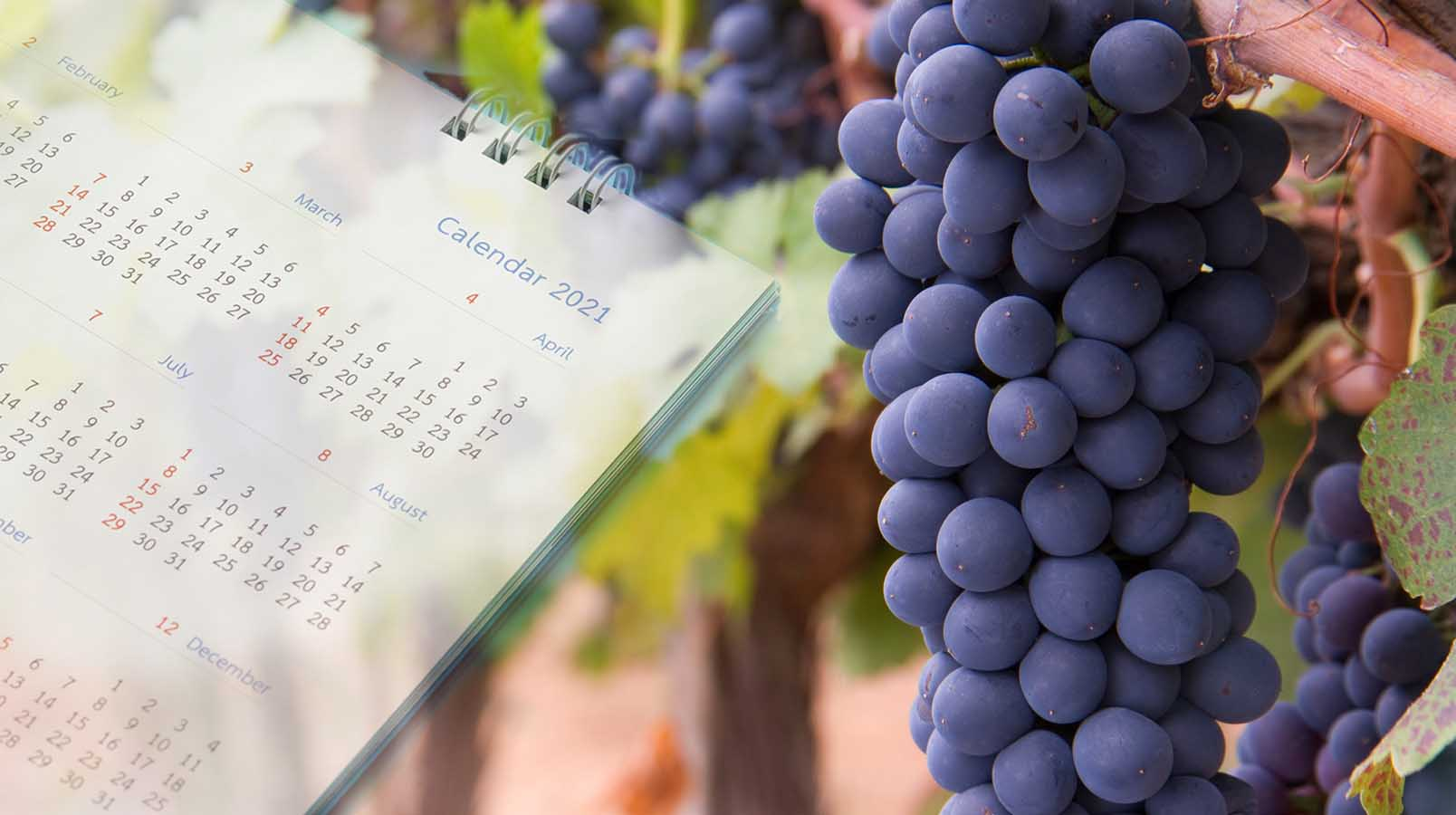 Blog   Wine & Spirit Education Trust